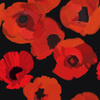 Poppy Flowers on Black (Original)