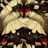 Macro Butterfly (Original)