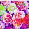 Vivid Roses (Original)