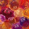 Romantic Ranunculus (Original)