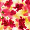 Wild-Flowers (Original)