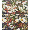 Floral Haze (Original)