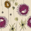Flowers Drawn (Original)