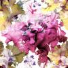 Iris Blooming (Original)