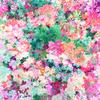 Colorful Daisy Print (Original)