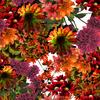 Intense Botanical - ESTP_DIANA_0071 (Original)