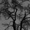 Tree Branches (Original)