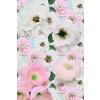 Floral Blush (Original)