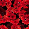 Red Flowers (Original)