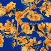 Blue and Yellow Splash (Original)